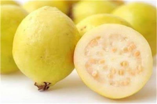 لصحة جيدة الجوافة فاكهة الشتاء فوائد لا تحصى