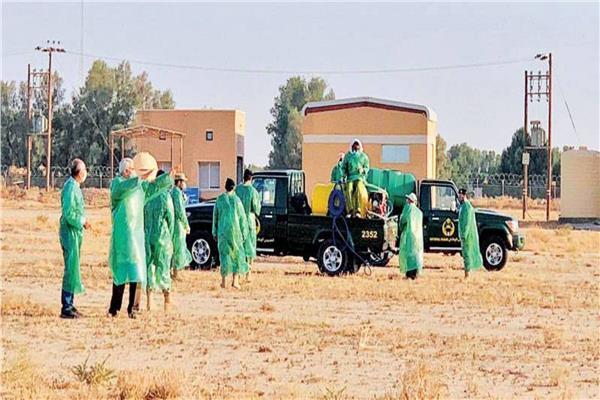 «الزراعة»: 55 قاعدة لمنع عبور الجراد الصحراوي الحدود المصرية
